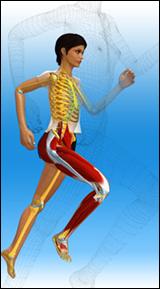 anatomie 3D
